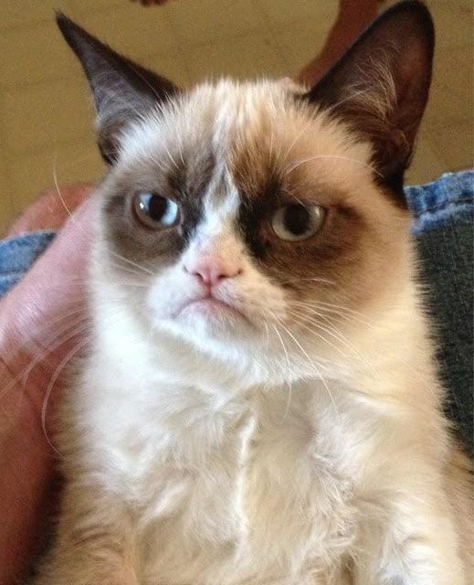 Foto de la gata Tardar Sauce (Grumpy Cat), publicada originalmente en Reddit el 22-09-2012